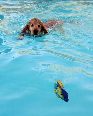 Dogandfishy