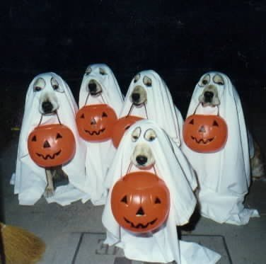 Ghost_dogs