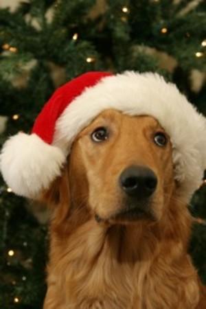 Santa_dog_1