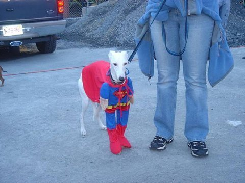 Superman_dog