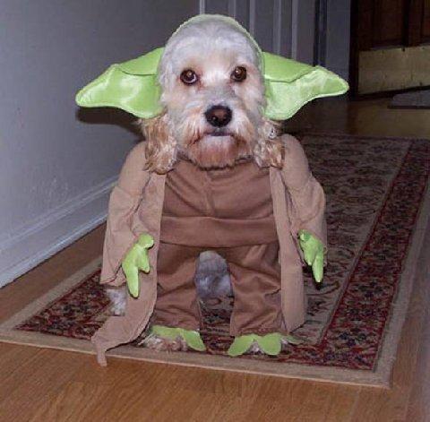 Yoda_dog